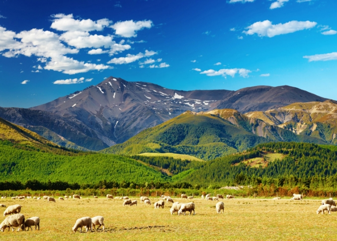 Romantic New Zealand 14 Days